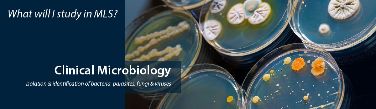 petri dishes of various bacteria - What will I study in MLS? Clinical Microbiology - isolation & identification of bacteria, parasites, fungi & viruses