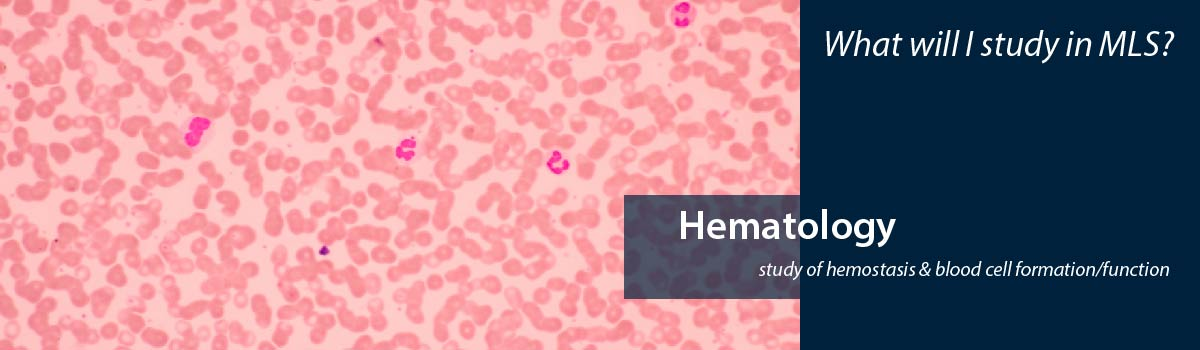 pink slide of blood cells - What will I study in MLS? Hematology - study of hemostasis & blood cell formation/function